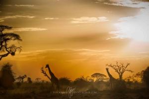 Kenia_Safari-10