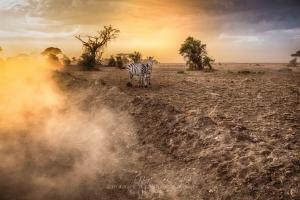 Kenia_Safari-13