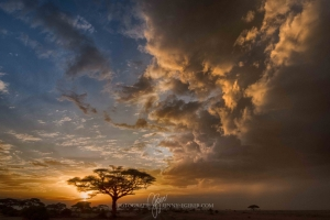 Kenia_Safari-14
