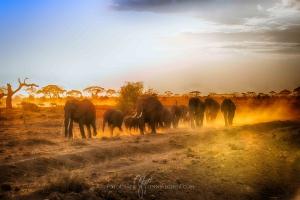 Kenia_Safari-12