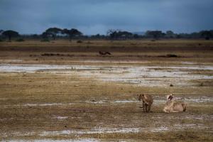 Kenia_Safari-18
