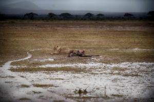 Kenia_Safari-19